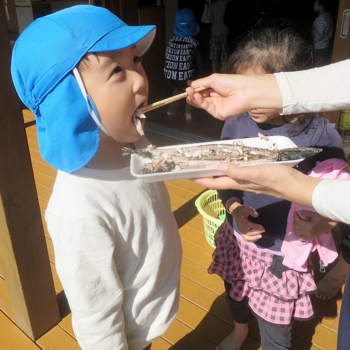 所沢市のあかね保育園のサンマ焼きパーティーのサンマを食べる子どもの画像