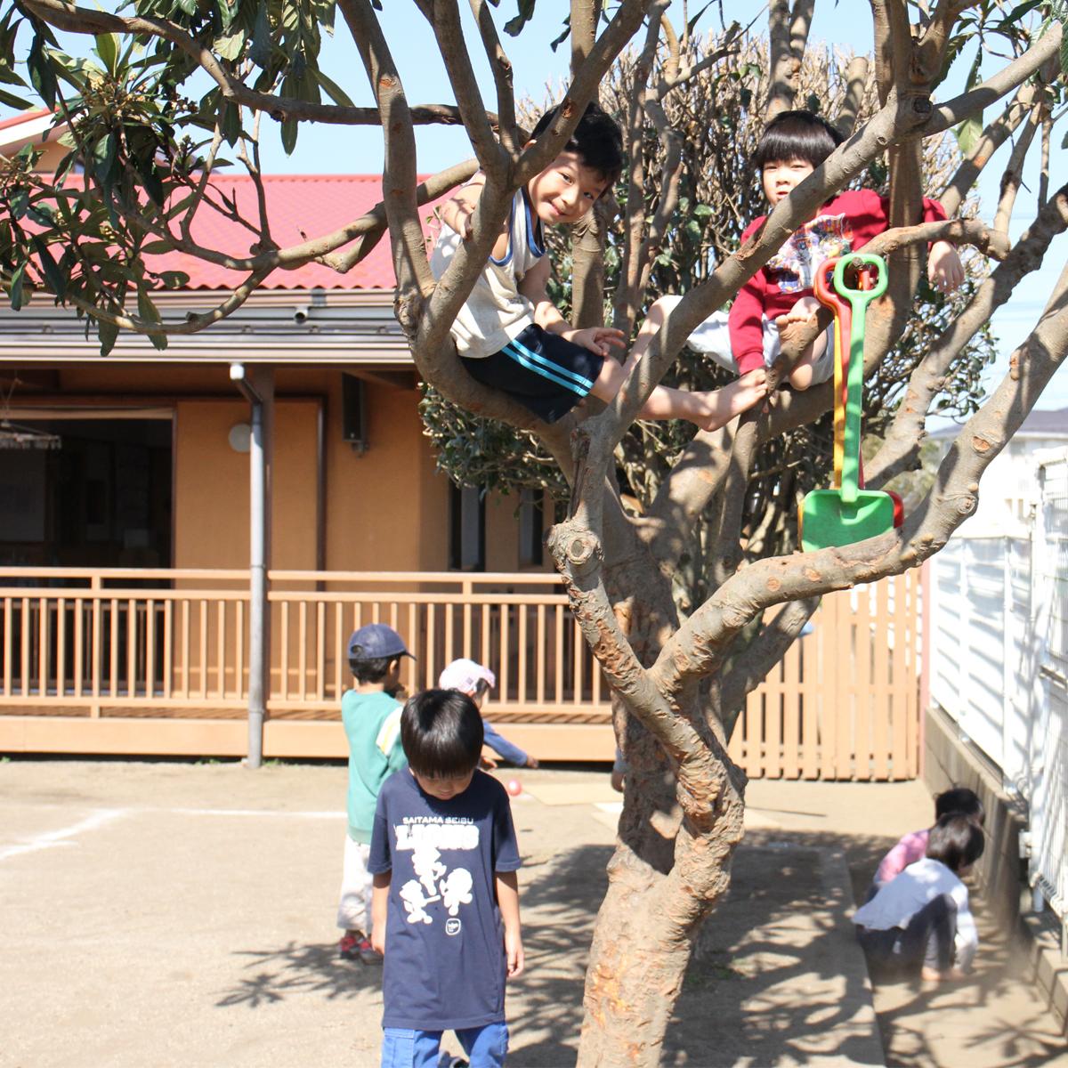 所沢市のあかね保育園の午前の遊びの木登りの画像
