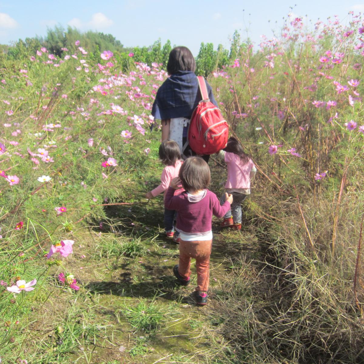 所沢市のあかね保育園のお花畑のお散歩の画像