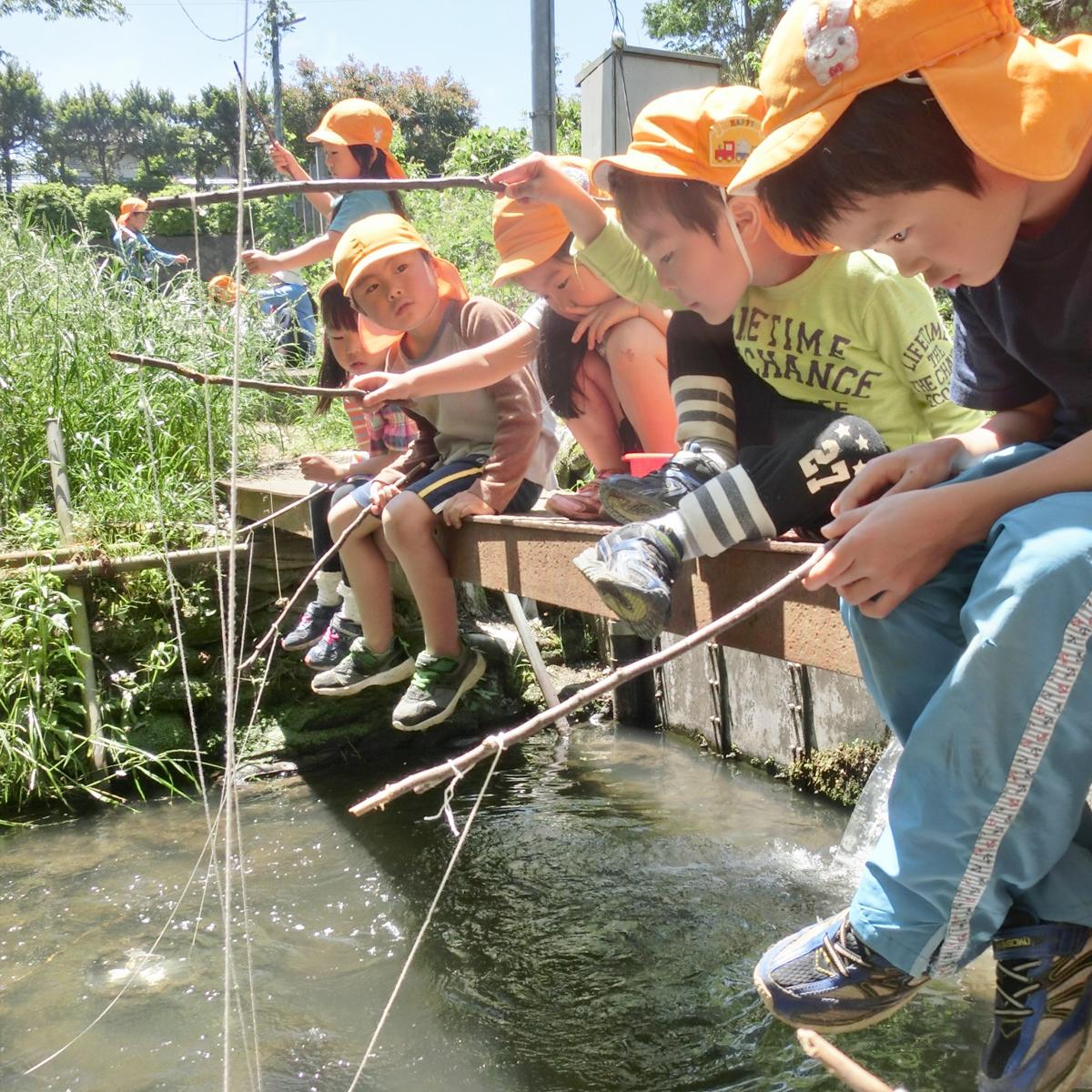 所沢市のあかね保育園のザリガニ釣りのお散歩の画像