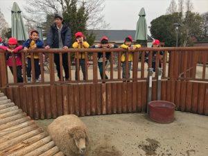 所沢市のあかねの虹保育園のひばり組3歳児クラス、ふくろう組4歳児クラス、おおたか組5歳児クラスが合同で東武動物公園に遠足に行った時の写真